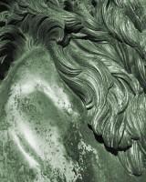 Lions' Mane