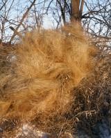 Prairie Grass Swirl