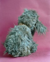 Stuffed Toy Poodle